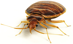 bed bug control los angeles